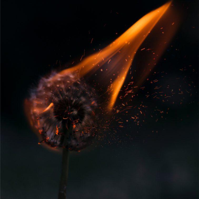 Manche Aminosäuren können im Übermaß entzündliche Feuer im Körper entfachen!