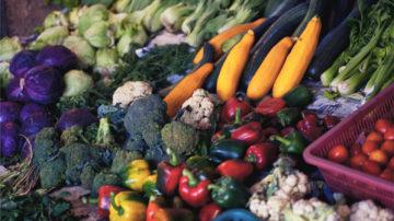 Ballaststoffe und der Darm – Butyrat und andere Stoffe