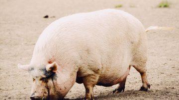 Gesättigte Fettsäuren: Freund oder Feind? Teil 2