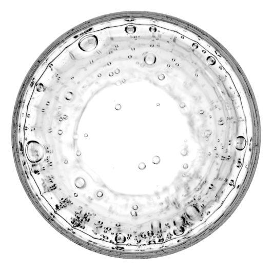 Bakterielle Evolution