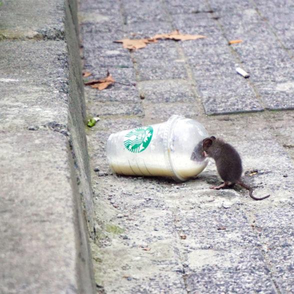 Was haben Mäusestudien über Methionin und Lebenserwartung herausgefunden?
