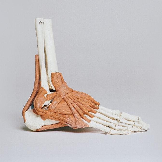 Ohne Glycin hätte der Mensch weder Hand noch Fuß!