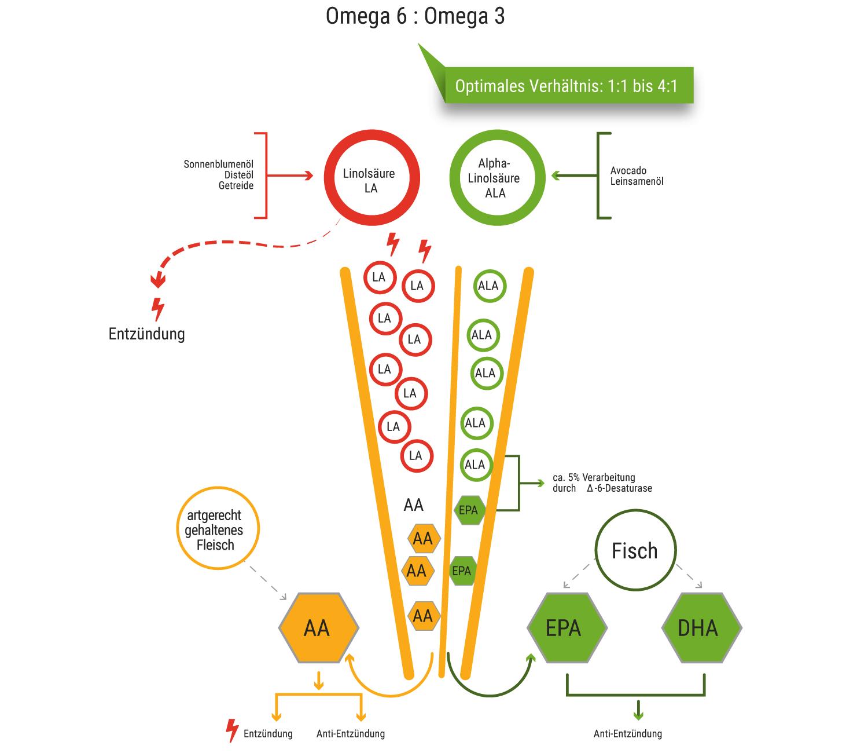 Omega Fettsäure Test Texte Addons Nutriexpertscom