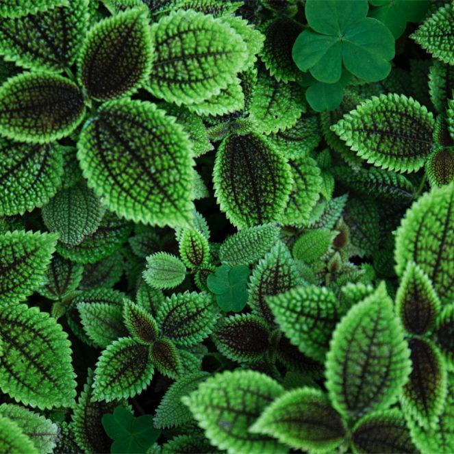 Viele Pflanzen waren schon seit Jahrtausenden ein Heilmittel für den Menschen