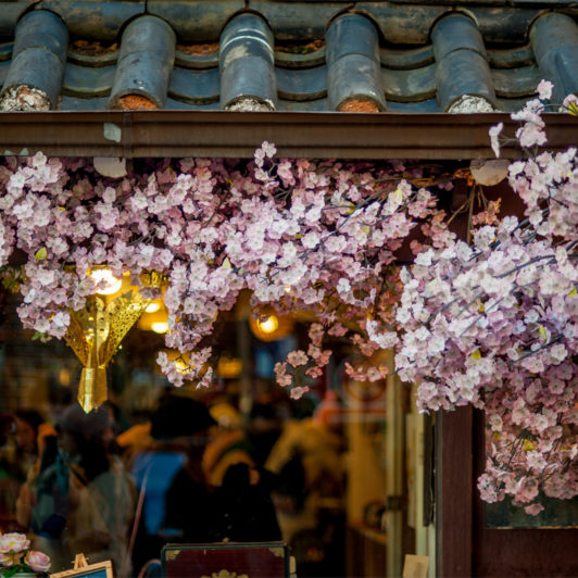 Ginseng bezieht sich meist auf den koreanischen Panax Ginseng